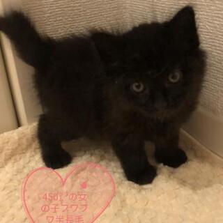 1ヶ月赤ちゃん👶黒猫兄妹一緒に里親様決定しました。