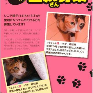 ミケ猫 シニアの親子猫です!