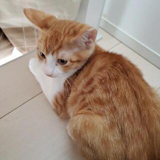 3ヶ月の子猫