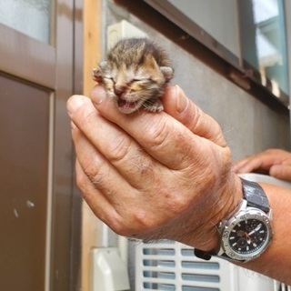 産まれたての仔猫
