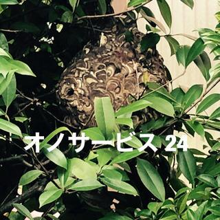 名古屋市 蜂の巣駆除、ヘビ、コウモリ、ネズミ、ゴキブリ − 愛知県