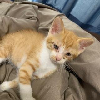 子猫2か月