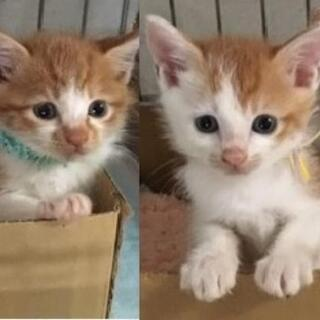 生後3〜6ヶ月の子猫達