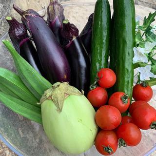 夏野菜とじゃがいも 玉ねぎ カボチャのセット