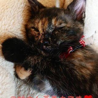 生後2ヶ月のやんちゃだけど甘えん坊のさび猫
