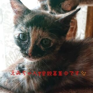 生後2ヶ月の優しい性格のさび猫