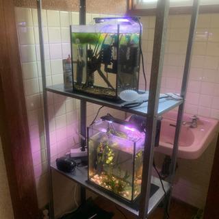 水槽・棚・熱帯魚・エビセット