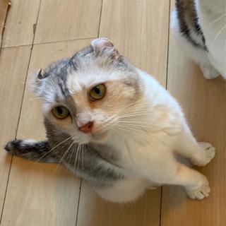 甘えんぼ保護猫ちゃん