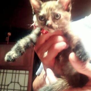 サビ猫 メス