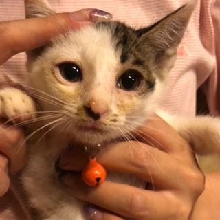 保護済の子を更新【兄妹従姉妹合わせて12匹の子猫達!】