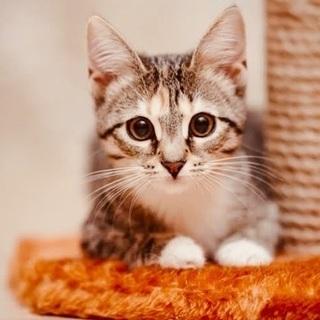 ネコ好きに悪い人はいない