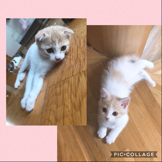 里親さん決定致しました。子猫飼える方いらっしゃいますか?