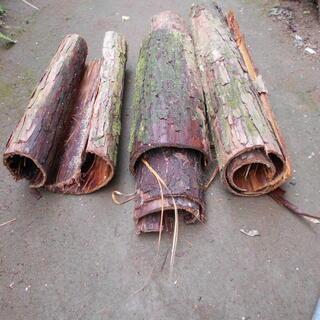 杉の木の皮さしあげます。