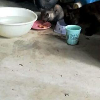 世羅町付近 猫親子の里親募集