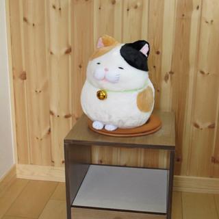 2ヶ月無料キャンペーン★「猫びより7月号」で紹介された、猫のため...
