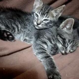 6月23日生まれ子猫姉妹