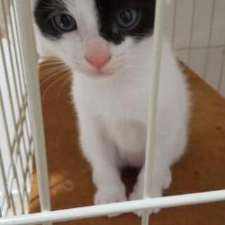 2020年5月4日産まれの子猫の新しい家族を募集中❗️
