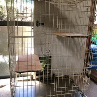 ゲージ レンタル 猫