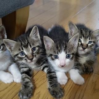 7月11日生まれの子猫5匹|野良猫が身篭っていたので保護しました...
