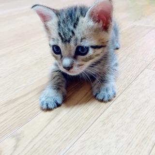 生後1ヶ月程♡子猫4匹 − 鳥取県