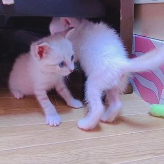 生後1ヶ月程♡子猫4匹 - 里親募集