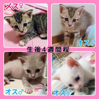 生後1ヶ月程♡子猫4匹の画像