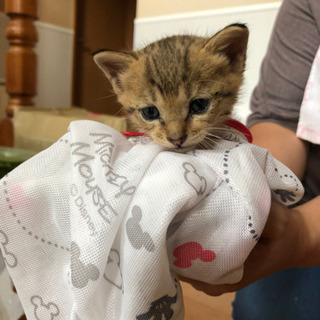 かわいい❤️生後1.5か月の男の子