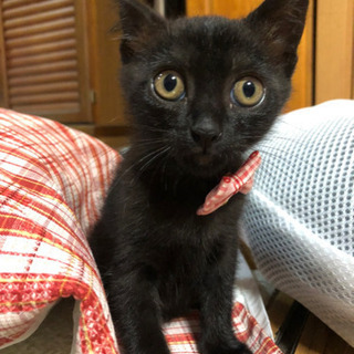 生後2ヶ月の黒猫♡女の子