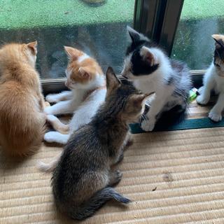 里親募集1ヶ月半子猫