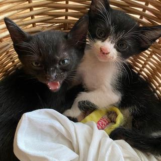 里親募集してます!!黒猫2匹貰い手見つかりました〜白黒の子2匹お...