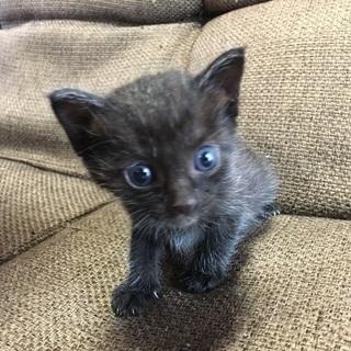 子猫2匹の里親様募集(生後3〜4週、女の子)