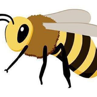 蜂の駆除します!