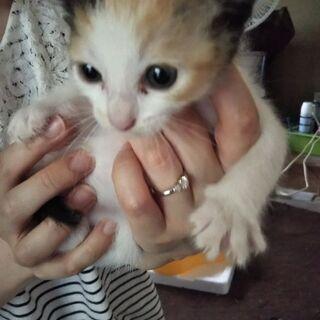 子猫あげます