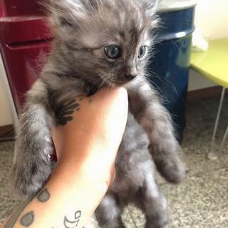 猫ちゃん6匹の里親募集
