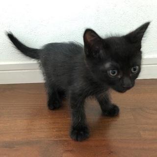 元気な黒猫くん