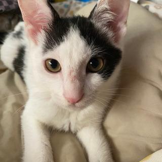 背中に❤可愛い白黒の男の子♂生後3ヶ月半~4ヶ月くらい