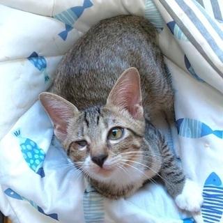 片目の子猫、シロキジ、4ヶ月オス3