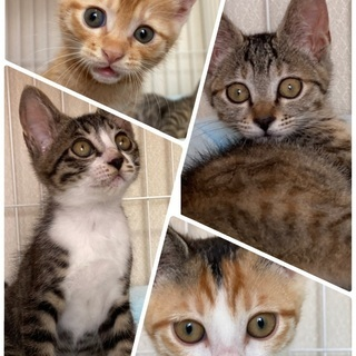 子猫4匹2カ月 一時停止中