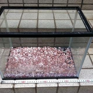GEXの35cmの水槽と小石砂利