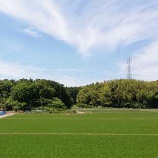 草刈り(空き地やお庭)