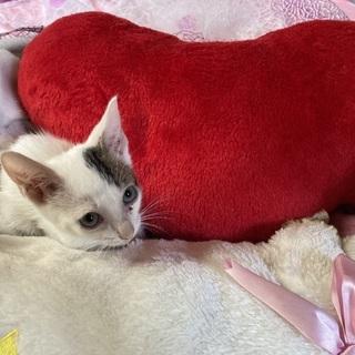 3ひきの白猫ベビー