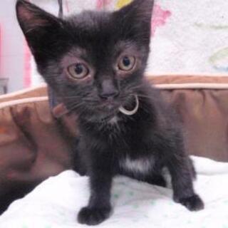 黒猫2匹 さとおや決定