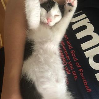 生後10ヶ月くらいの男の子 - 猫