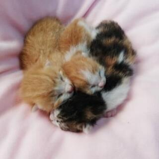 保護猫(1週間程の)3びき