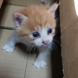 保護猫 約1ヶ月程