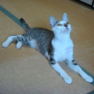 保護した迷い猫の里親を探しています。