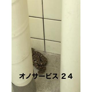 蜂の巣、ヘビ、コウモリ、ネズミ駆除  − 愛知県