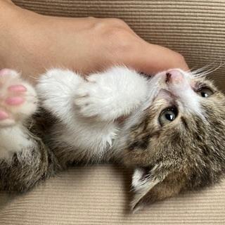 3ヶ月の子猫♀です