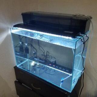 アクアリウム・テラリウム 60cm水槽セット
