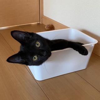 黒猫 メス